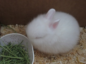 This picture proves my theory that bunnies are made of part cottony fluff + sugary sweetness + love. I'm sorry but this pic renders all snark impossible.