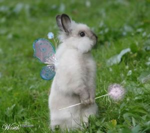 I want to make a joke about a fairy princess bunny, but I'm I think I just did....